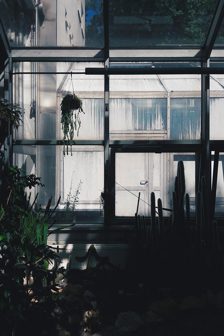 Palmiarnia w Łodzi (3)