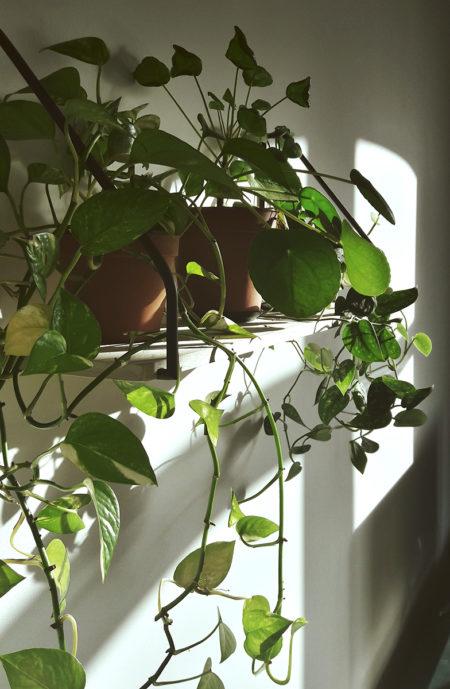 Półka i rośliny