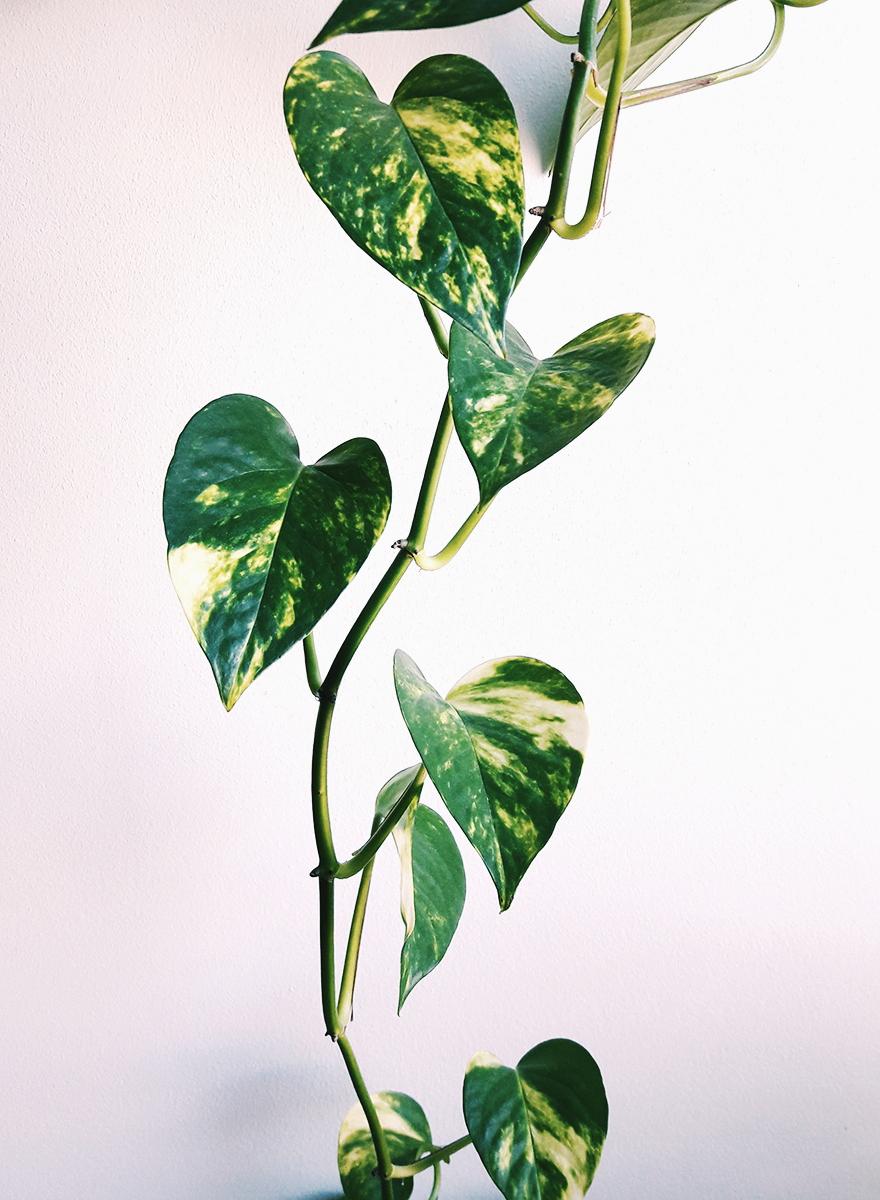 Rośliny wiszące 1