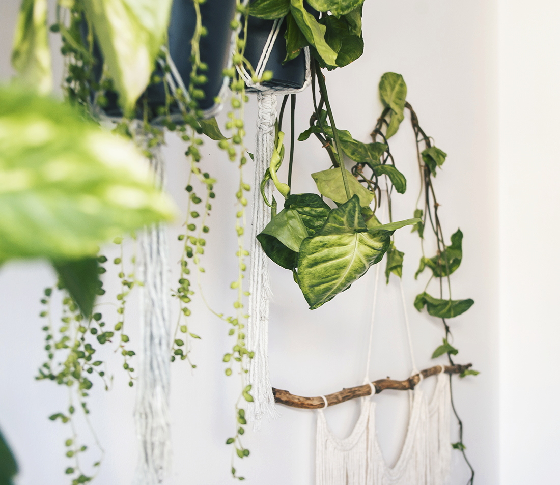 Rośliny wiszące 3