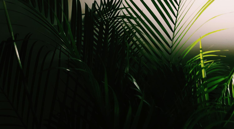 Wierzymy, że rośliny potrafią zdziałać cuda